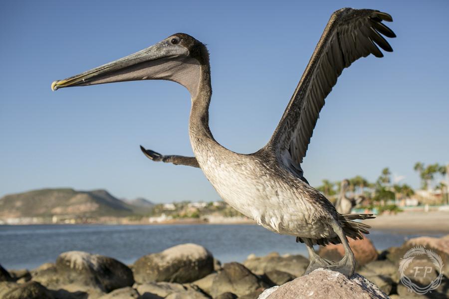 014-curso-de-foto-en-la-paz-francisco-peña-pelican