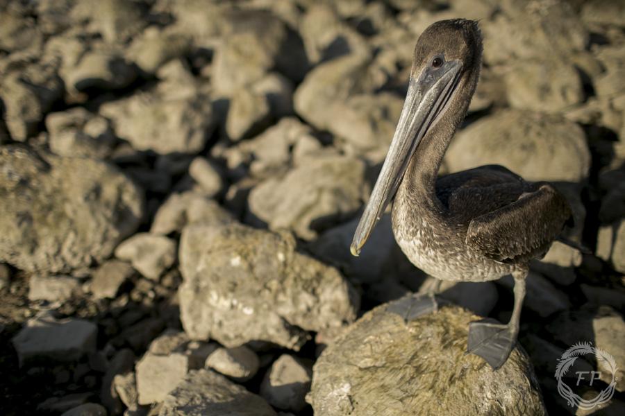 015-curso-de-foto-en-la-paz-francisco-peña-pelican