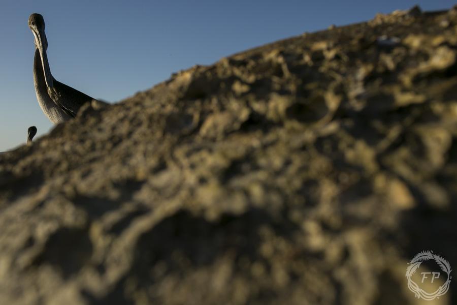 016-curso-de-foto-en-la-paz-francisco-peña-pelican