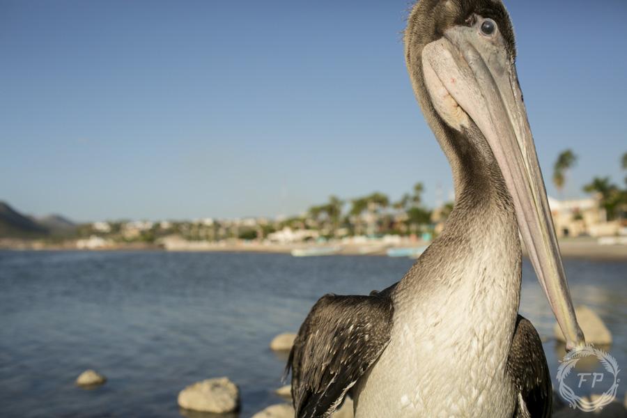 017-curso-de-foto-en-la-paz-francisco-peña-pelican